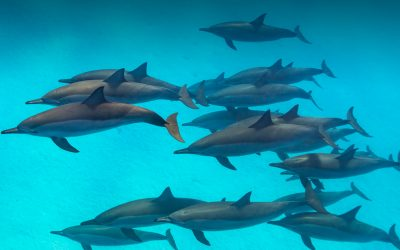 Dolphins @ Longy!